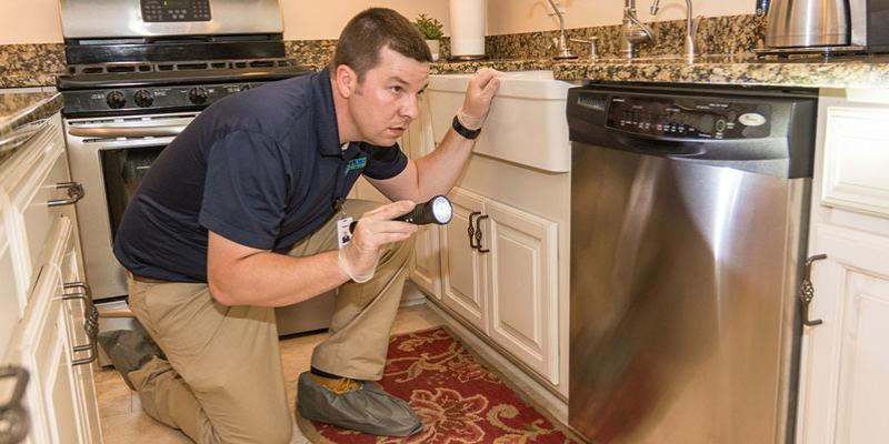 Pest Inspection When Promoting A House