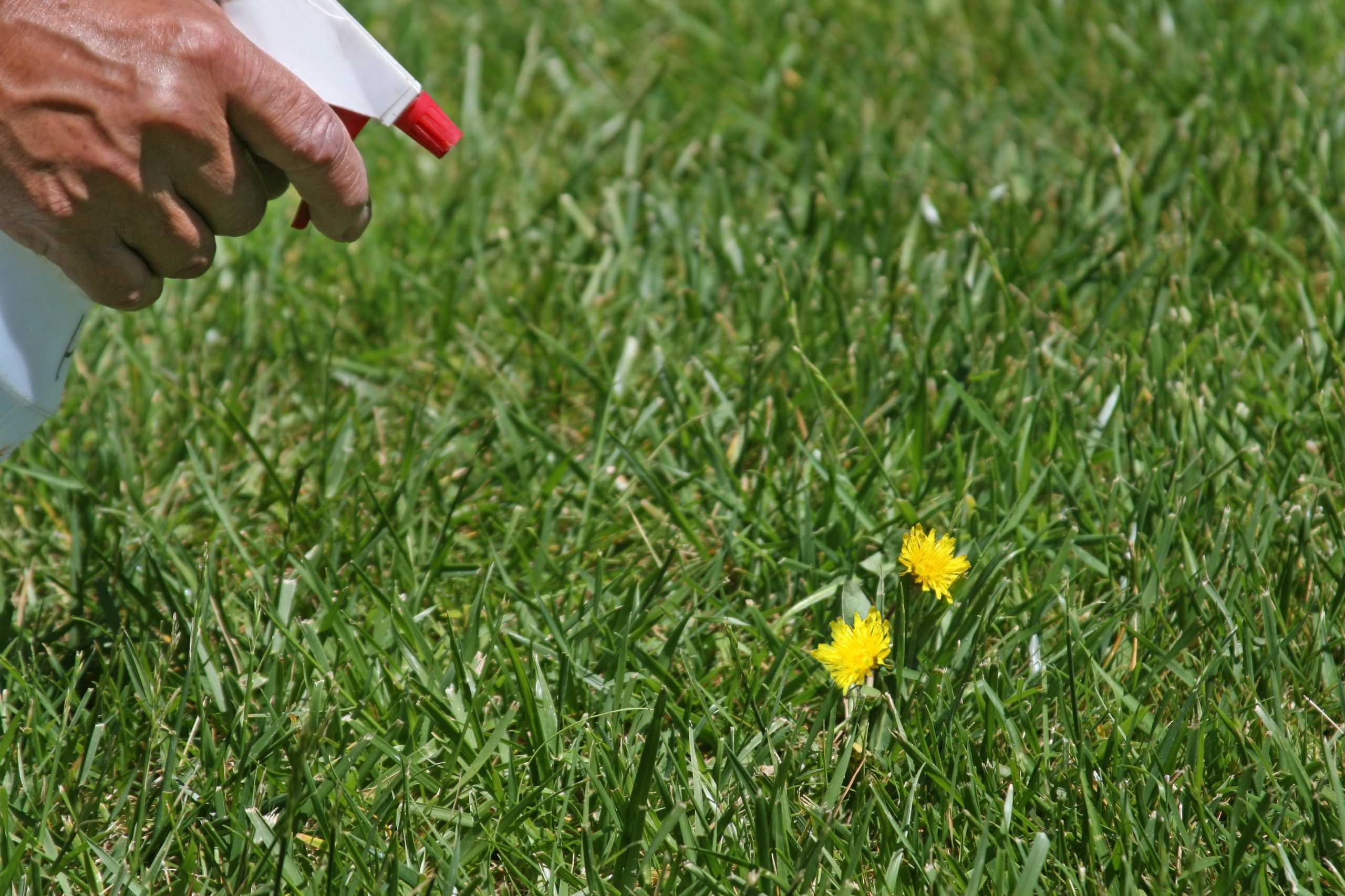 Where To Discover Obtain Rid Of Crab Grass